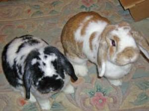 Nutmeg Sprinkles IMGP0537 rabbits