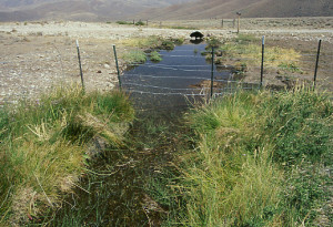 This photo by Mike Hudak dramatically shows the impact of cattle ranching on the American West
